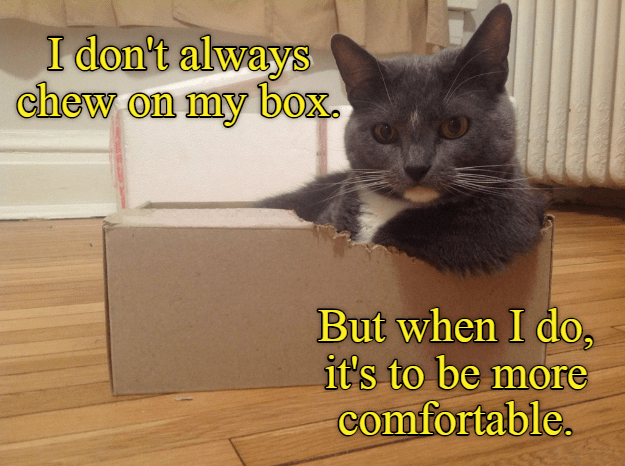 Cat - I don't always chew on my box But when I do it's to be more comfortable.