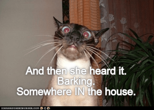 Cat - And then she heard it. Barking. Somewhere IN the house. ICANHASCHEE2EURGER cOM