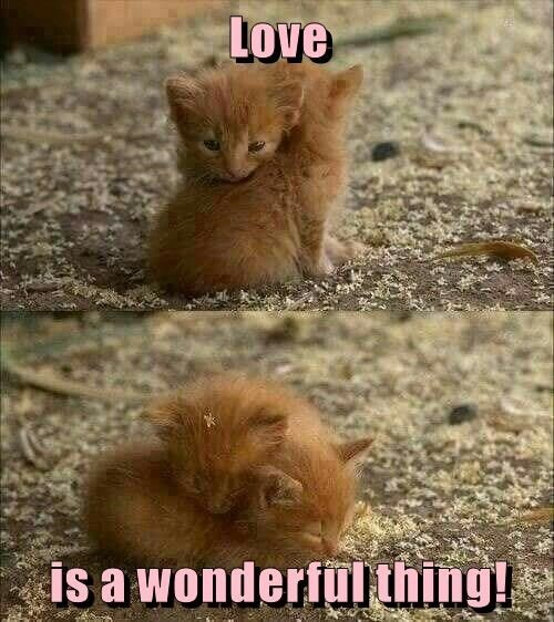 Cat - Love is a wonderfulthing!
