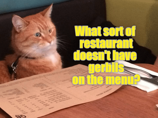 Cat - What sort of restaurant doesn't have gerbils on the menu? tooont t*9