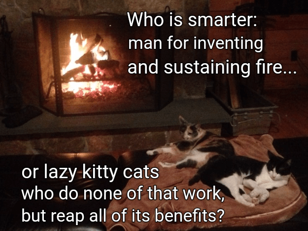 Heat - Who is smarter: man for inventing and sustaining fire... or lazy kitty cats who do none of that work, but reap all of its benefits?