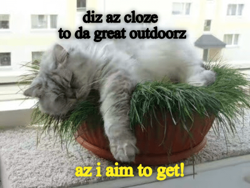 Cat - diz az cloze to da great outdoorz aziaim to get!
