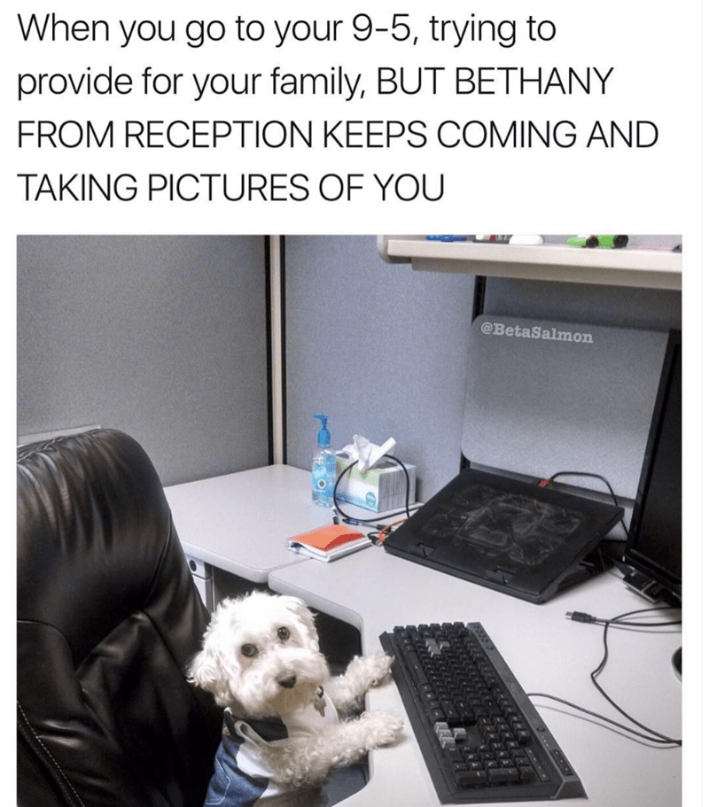 Canidae - When you go to your 9-5, trying to provide for your family, BUT BETHANY FROM RECEPTION KEEPS COMING AND TAKING PICTURES OF YOU @BetaSalmon