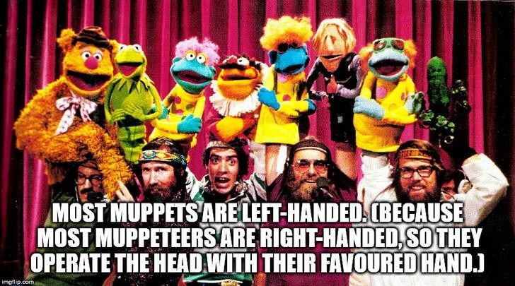 fun fact - Photo caption - MOST MUPPETSARELEFT-HANDED(BECAUSE MOST MUPPETEERSARE RIGHT-HANDED,SOTHEY OPERATE THE HEAD WITH THEIR FAVOURED HAND. imgflip.com