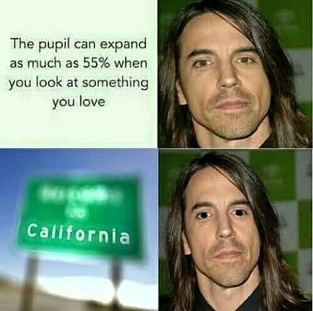 Face - The pupil can expand as much as 55% when you look at something you love California