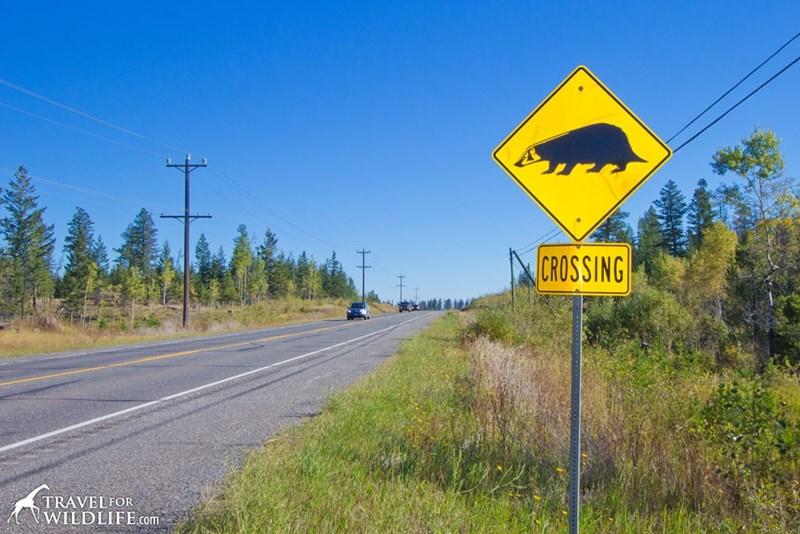 Road - CROSSING TRAVELFOR WILDLIFE.com