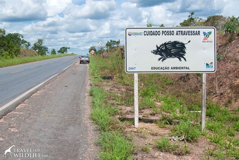 Road - CUIDADO POSSO ATRAVESSAR FEMA-MT Mato Grosso EDUCAÇÃO AMBIENTAL DNIT TRAVELFOR WILDLIFE.com