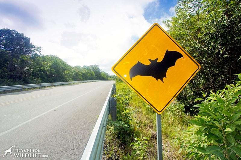 Traffic sign - TRAVELFOR WILDLIFE.com