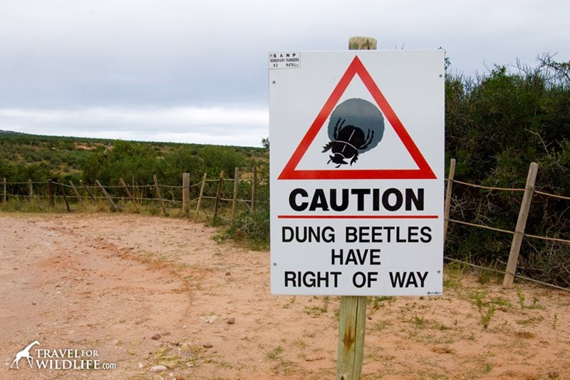 Sign - s ANP ONDRARY RANGERS NATAL K2 CAUTION DUNG BEETLES HAVE RIGHT OF WAY TRAVELFOR WILDLIFE.com