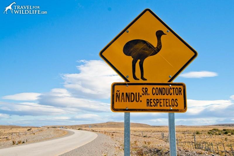 Flightless bird - TRAVELFOR WILDLIFE.com SR.CONDUCTOR NANDU: RESPETELOS