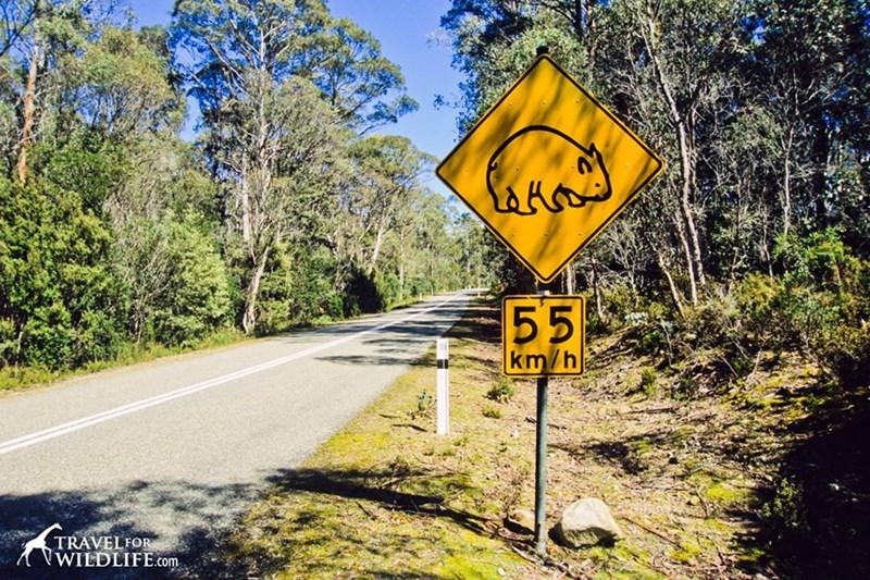 Traffic sign - 55 km/h TRAVELFOR VWILDLIFE.com