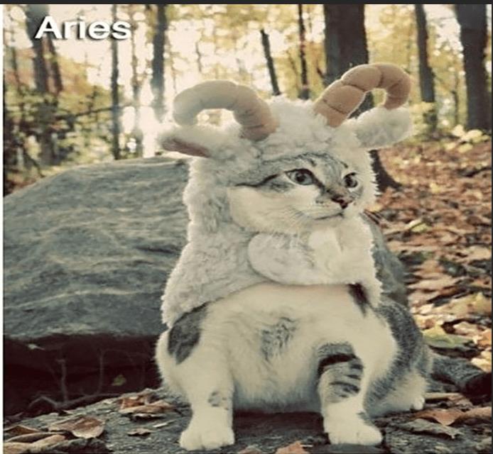 Snout - Aries
