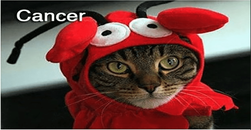Cat - Cancer