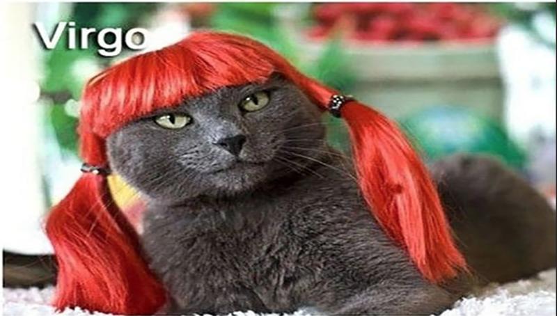 Cat - Virgo