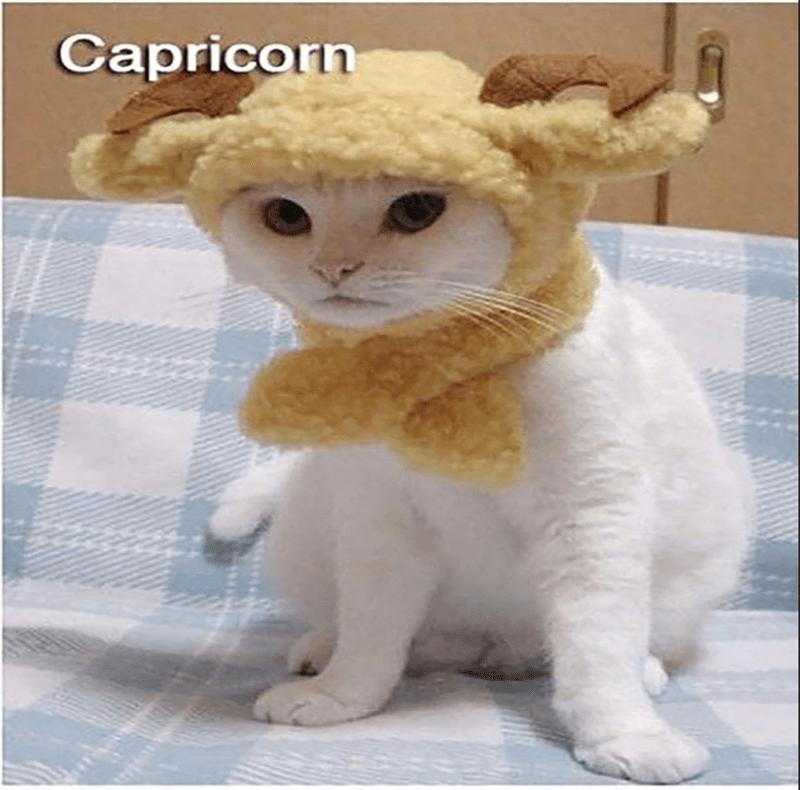 Cat - Capricorn