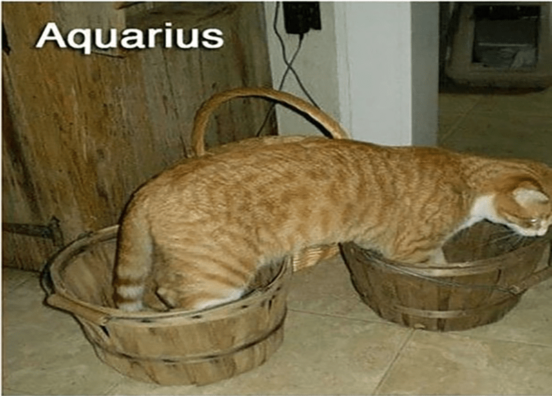 Cat - Aquarius