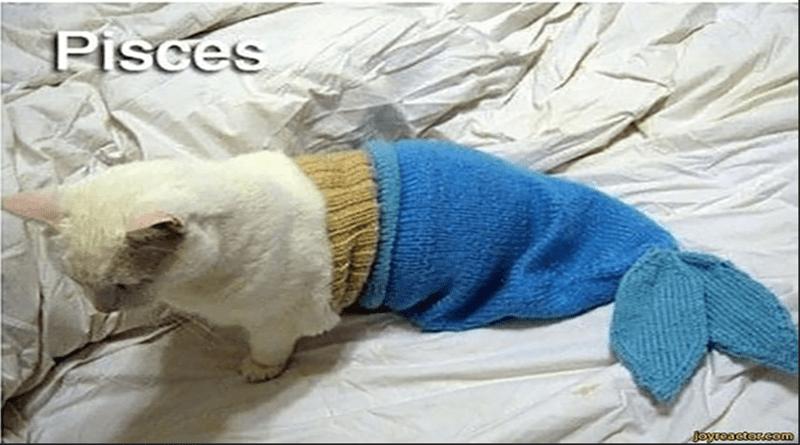 Mammal - Pisces Joyreactor.com