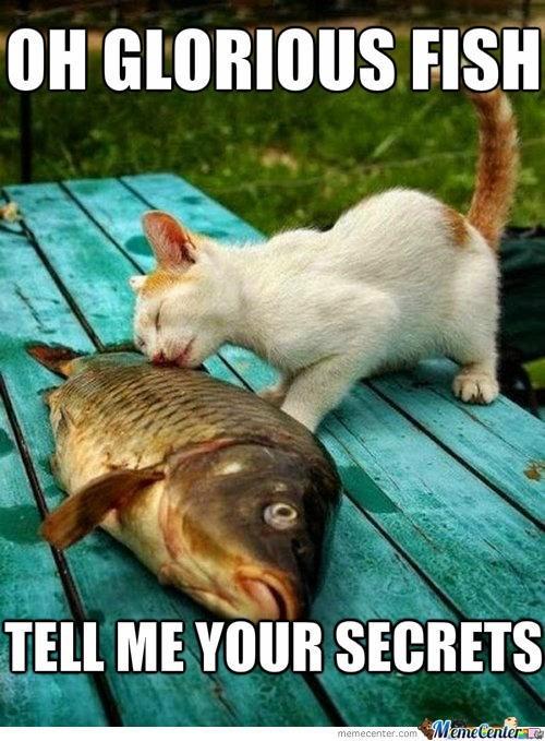 Photo caption - OH GLORIOUS FISH TELL ME YOUR SECRETS MemeCentere memecenter.com