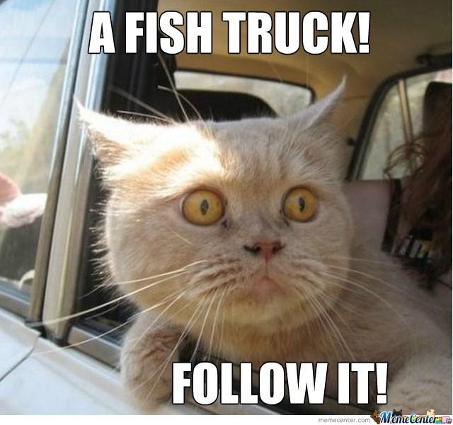Cat - A FISH TRUCK! FOLLOW IT! Meme Centerae memecenter.com