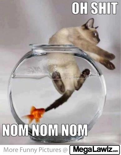 Photo caption - OH SHIT NOM NOM NOM More Funny Pictures @ MegaLawl.com