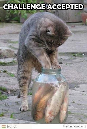 Cat - CHALLENGEACCEPTED thefunnyblog.org brokrek