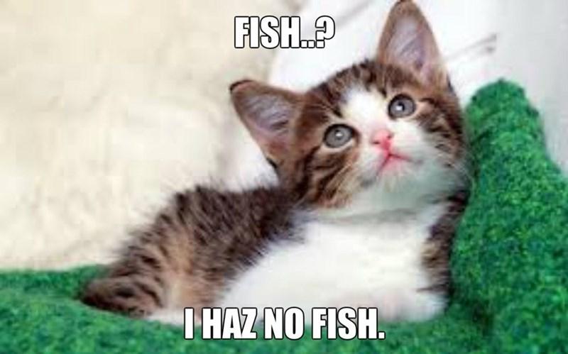 Cat - FISH IHAZ NO FISH.