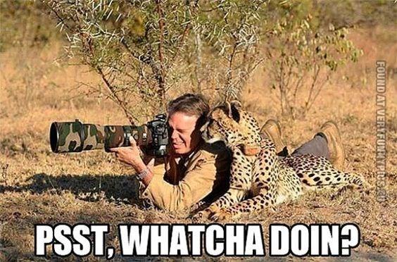 Wildlife - PSST, WHATCHA DOIN? FOUND AT VERYFUNNYPIUS.CU