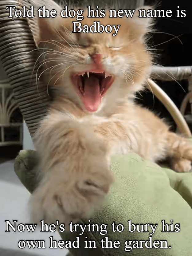 Kitten Whut Has You Dun Lolcats Lol Cat Memes Funny Cats Funny Cat Pictures With Words On Them Funny Pictures Lol Cat Memes Lol Cats