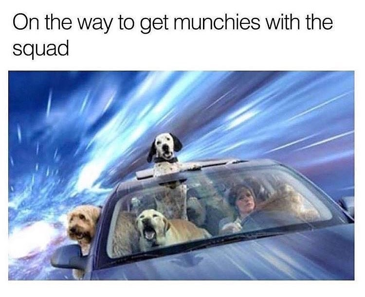 Funny meme about dogs with the munchies.