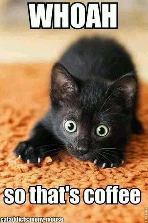 Cat - WHOAH so thats coffee cataddictsanony-mouse