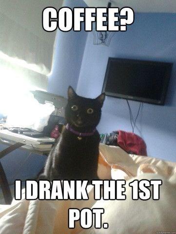 Cat - COFFEE? UDRANK THE 1ST POT. दे