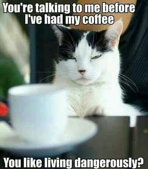 Cat - You're talking to me before I've had my coffee You like living dangerously?