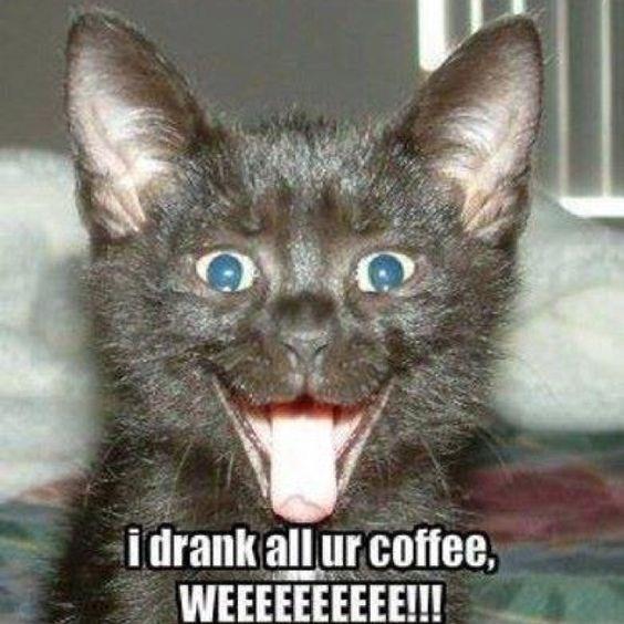 Cat - idrank allur coffee, WEEEEEEEEEE!!!