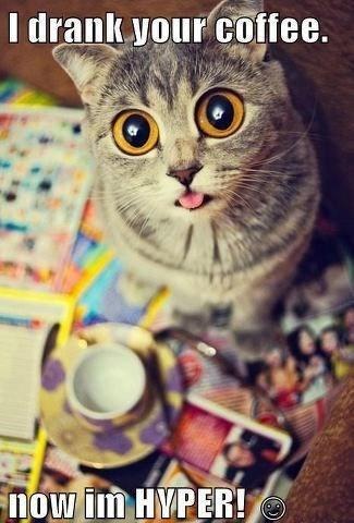 Cat - I drank your coffee. now im HVPER!