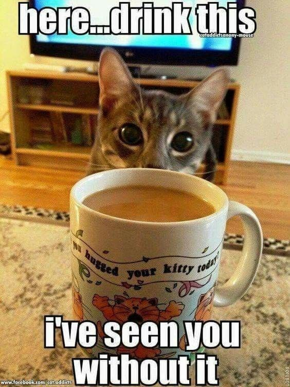 Cat - her...drink this cafaddictsanony-mousel hugeed vour kitty od ive seen you without it www.fotebook.tom/tataddicts ROFLB