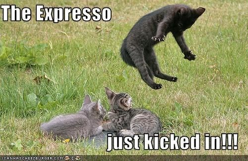Cat - The Expresso just kicked in!!! ICANHASCHEEZEURGER COM