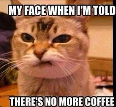 Cat - MY FACE WHEN IM TOLD THERE'S NO MORE COFFEE