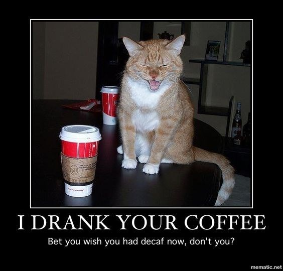 Cat - Asnaif I DRANK YOUR COFFEE Bet you wish you had decaf now, don't you? mematic.net