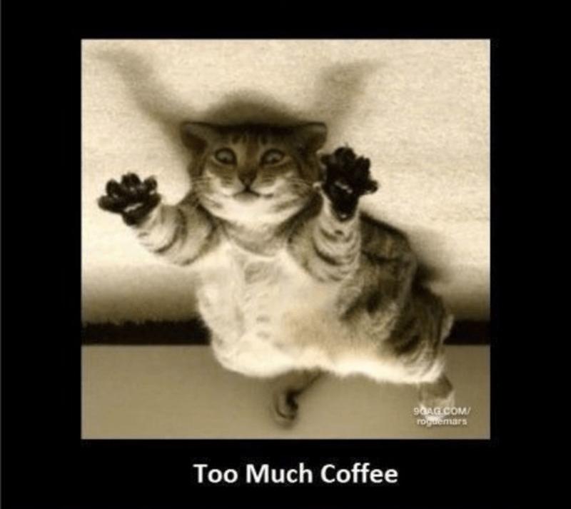 Cat - 9OAG COM roguemars Too Much Coffee