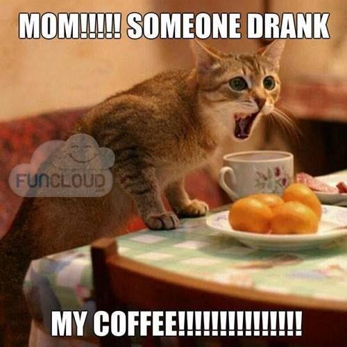 Cat - MOM!!!! SOMEONE DRANK FUNCLOUD MY COFFEE!!!!