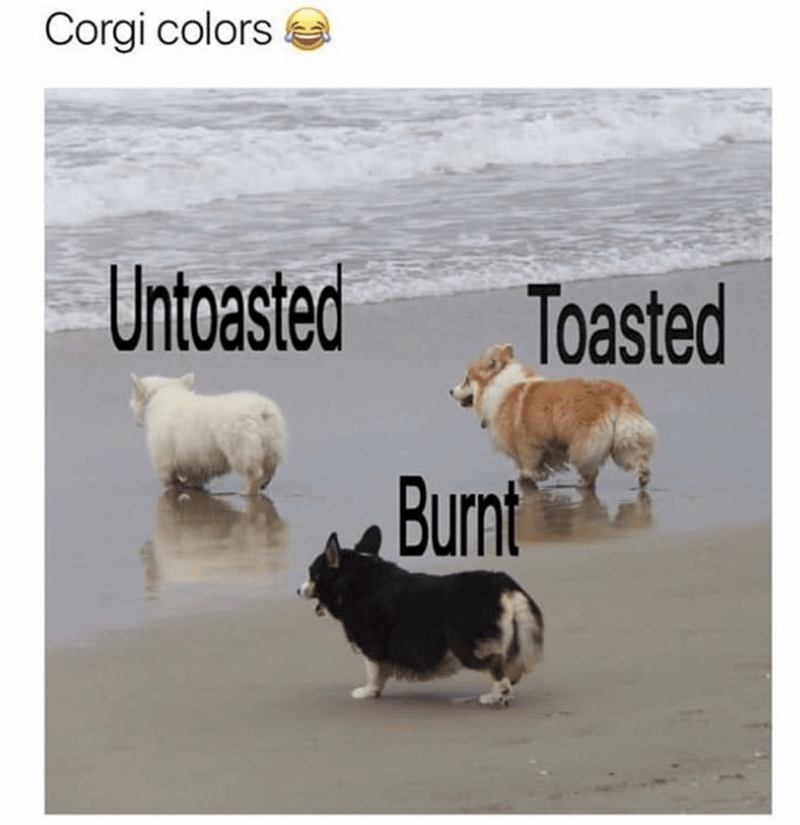 Mammal - Corgi colors Untoasted Toasted Burnt