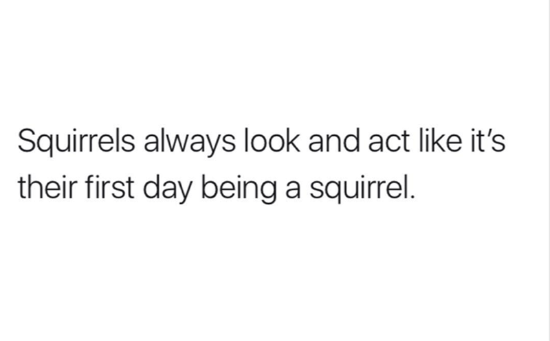 Text - Squirrels always look and act like it's their first day being a squirrel.