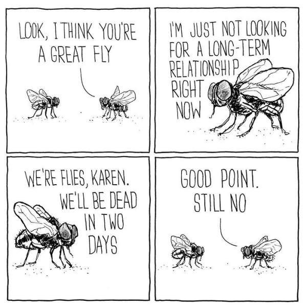 Insect - IM JUST NOT LOOKING FOR A LONG-TERM RELATIONSHIP RIGHT NOW LOK, ITHINK YOU'RE A GREAT FLY WE'RE FLIES, KAREN. WE'LL BE DEAD IN TWO DAYS GOOD POINT STILL NO