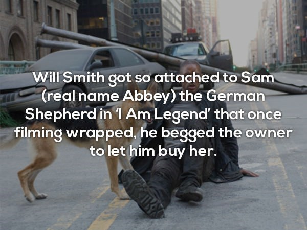 Street dog - Will Smith got so attached to Sam (real name Abbey) the German Shepherd in 1 Am Legend that once filming wrapped, he begged the owner to let him buy her.