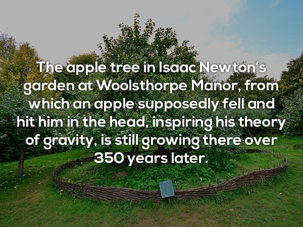 Natural landscape - The apple tree in Isaac Newton's garden at Woolsthorpe Manor, from which an apple supposedly fell and hit him in the head, inspiringhis theory of gravity, is still growing there over 350 years later.