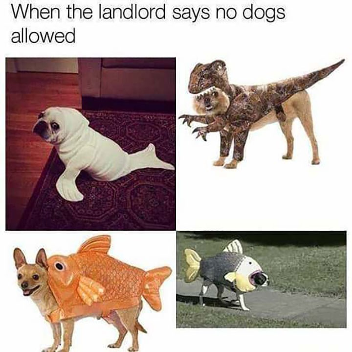 dog meme of dogs wearing different costumes