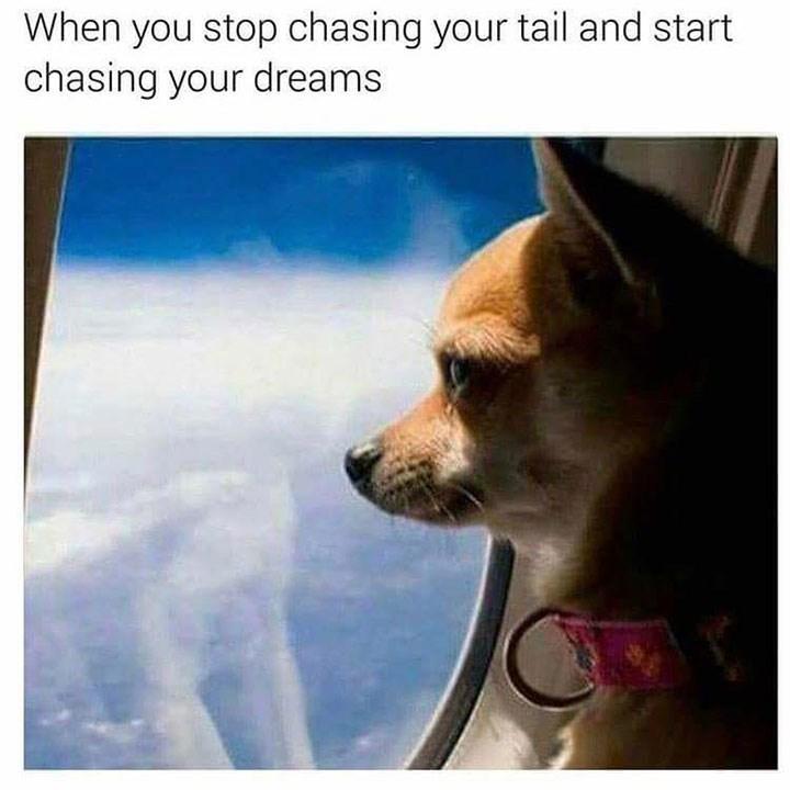 dog meme of a chihuahua looking outside a plane window