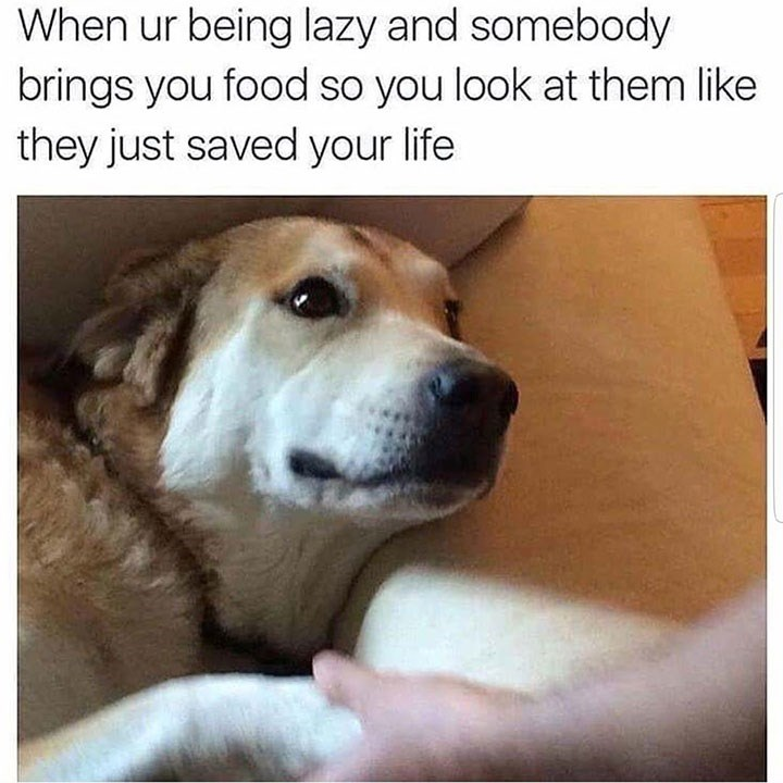 dog meme shaking a persons hand