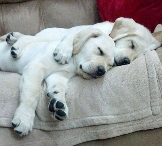 valentine's day cuddles - Mammal