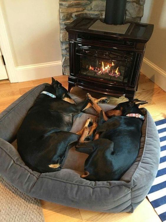 valentine's day cuddles - Comfort